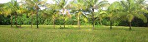 Navara rice NEF (UNF) organic navara rice