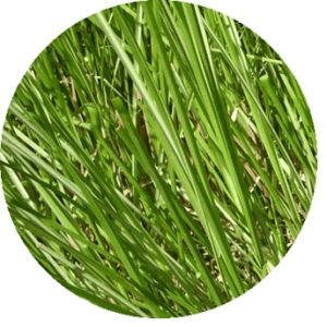 Ramacham (Vetiver) bed impact and influence - Health benefits