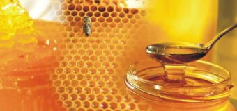 Forest honey – What is forest honey (kattu then)?
