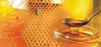 Forest honey – What is forest honey (kattu then)?