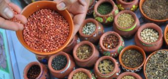 Mixed Millet Powder – Healthy combination of eight millets