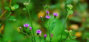 Dasapushpam – Divine Power Of Ten Sacred Herbs – Dasa-Pushpam