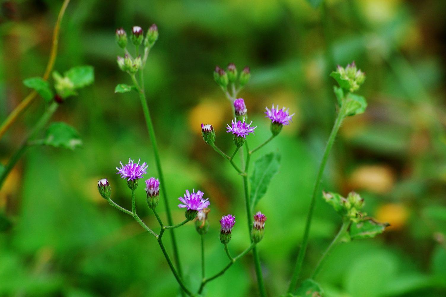 Dasapushpam Divine Power Of Ten Sacred Herbs Dasa Pushpam