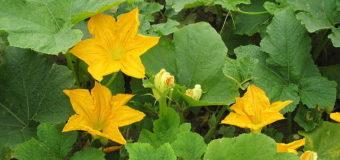 Pathila – Ten Leaves – Leafy vegetables in Karkidakam