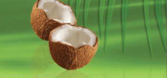 Coconut Oil – The traditional method of preparing virgin coconut oil