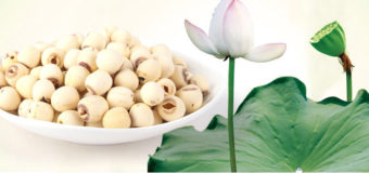 Lotus Seeds (Makhana/Gorgon Nut) – Nutritionally distinct from nuts and seeds