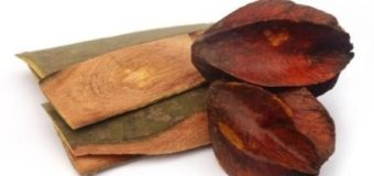 Neermaruthu or  Arjun Tree(Terminalia Arjuna)-Ayurvedic Cure for Heart Diseases