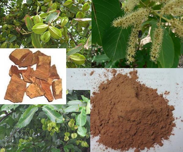 Neermaruthu Tholi/bark - Arjuna terminalia crushed/dried from www.NatureLoC.com