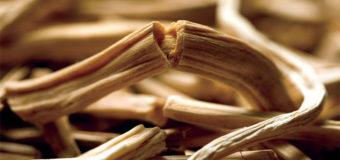 Shatavari(Asparagus racemosus)-A traditional Uterine Tonic from Ayurveda.
