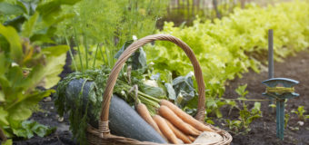 Kitchen-Garden – Why make a kitchen garden? Steps to growing your own food.