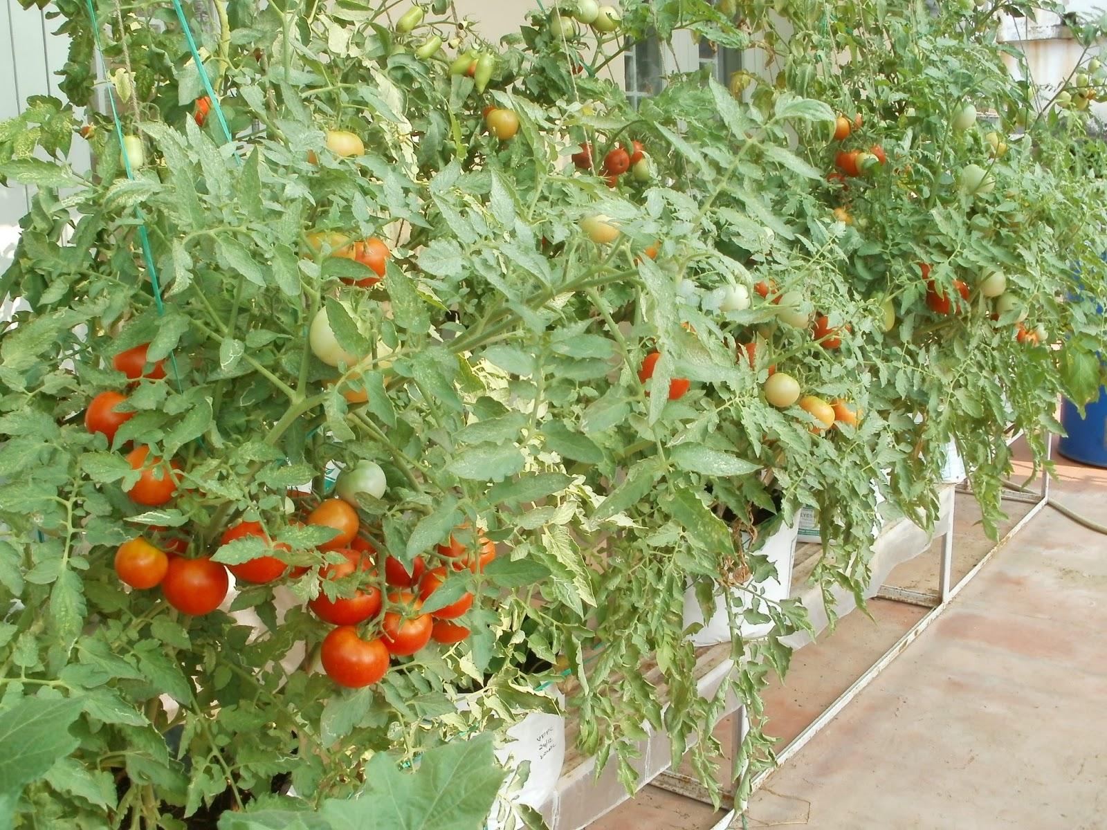 Small Modern Vegetable Garden