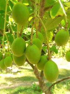 ambazhanga-pickle-buy-online-from-natureloc