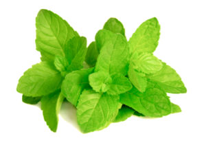 peppermint-leaves-products-buy-online