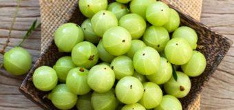 Amla (Phyllanthus Emblica) – The Indian Gooseberry