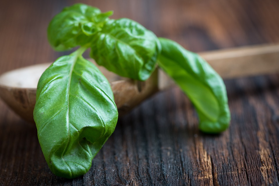Benefits Of Basil Leaf