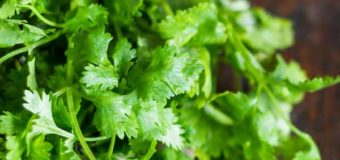 Top Benefits Of Coriander Leaf (Malliyila) – Cilantro