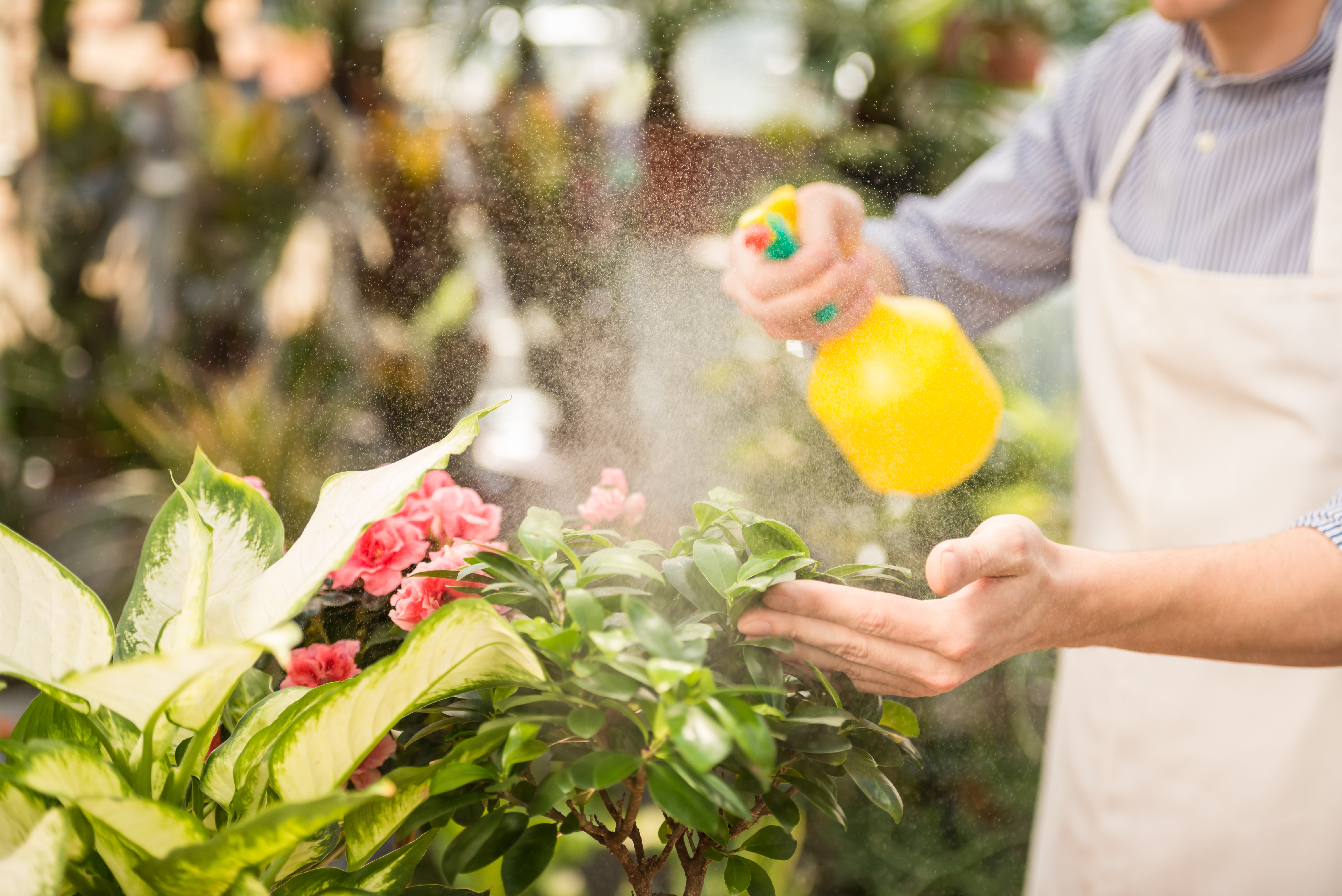 Remove Pesticides From Fruits & Vegetables