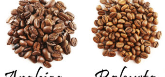 What are the different types of Coffee Beans ? Arabica & Robusta Coffee Beans