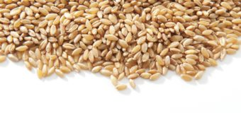 Wheat : 10 Powerful Health Benefits of Wheat You Need To Know
