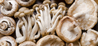 Edible Mushrooms | 6 Reasons Why You Should Eat Mushrooms Without Any Fear