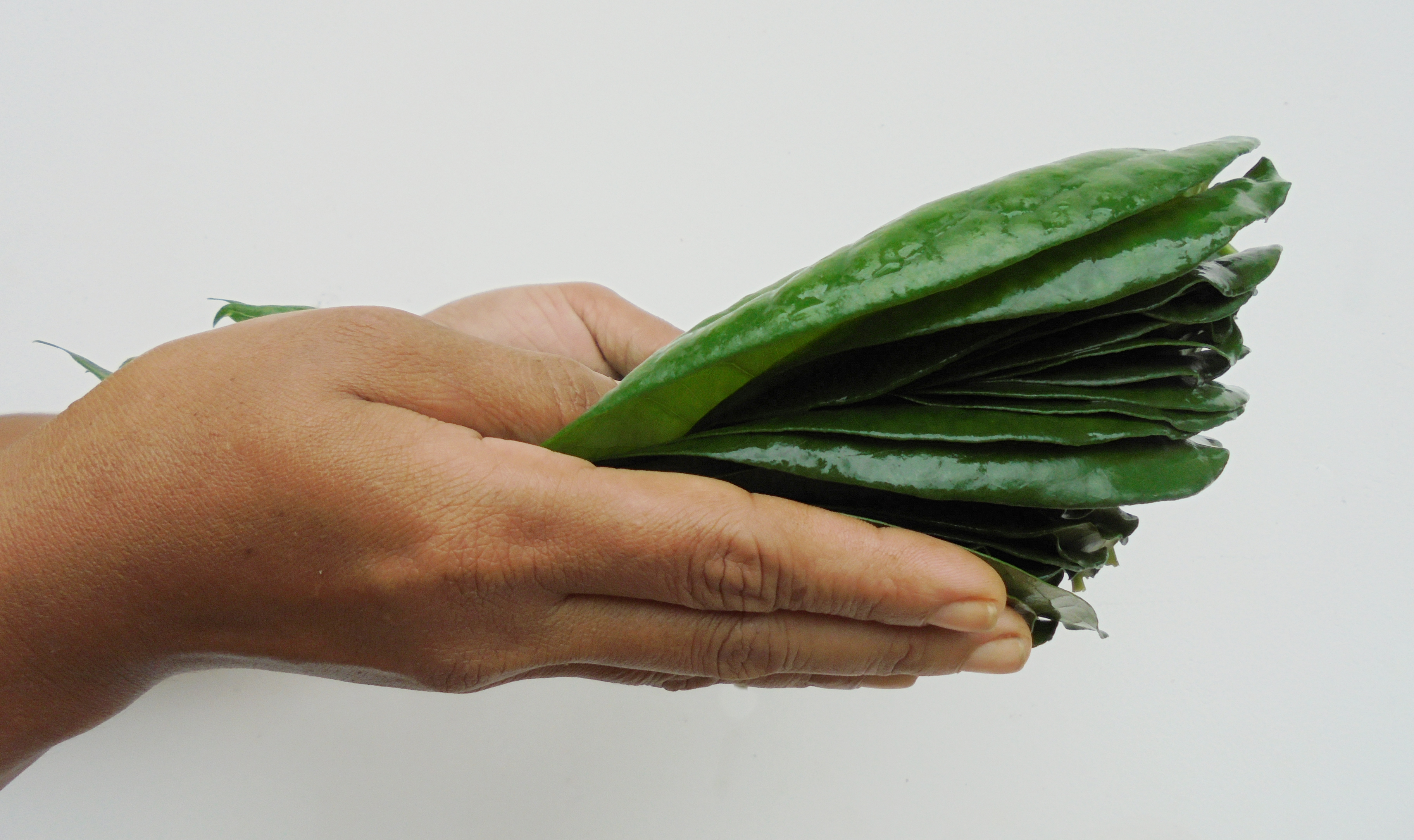 Betel Leaf (Vettila) For Digestion