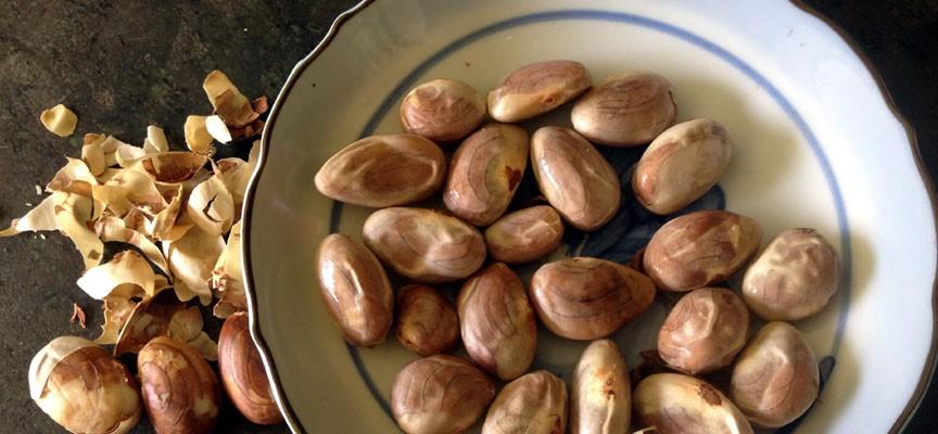 10 Jackfruit Seeds Chakka Kuru Benefits You Probably