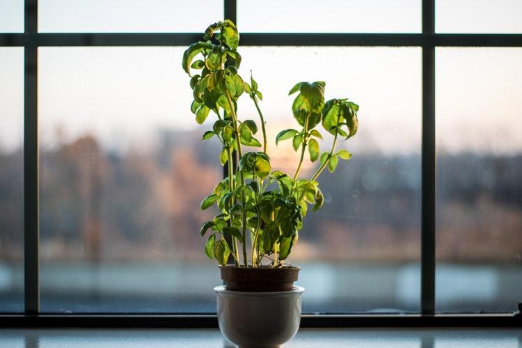 Anti-Ageing Ayurveda Herbs