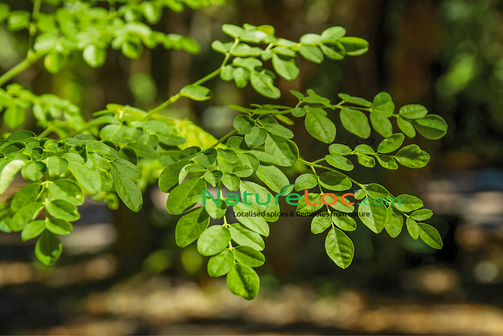 Moringa Skin Care Benefits